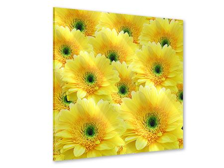 Acrylglasbild Flower Power Blumen