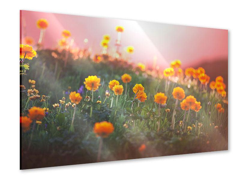 Acrylglasbild Die Bergwiese