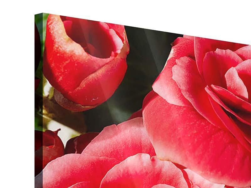 Acrylglasbild Rote Rosen