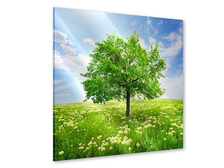 Acrylglasbild Der Baum