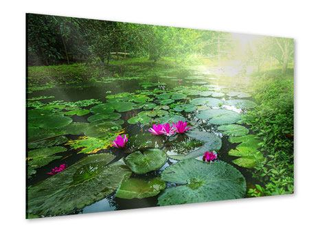 Acrylglasbild Gartenteich