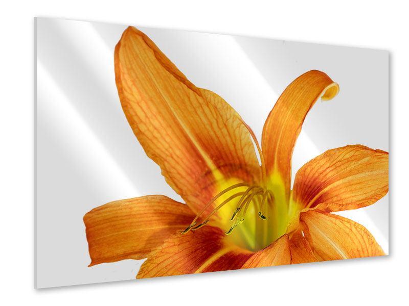 Acrylglasbild Die Tiger-Lilie