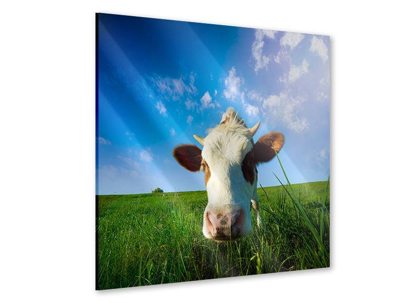 Acrylglasbild Die Kuh