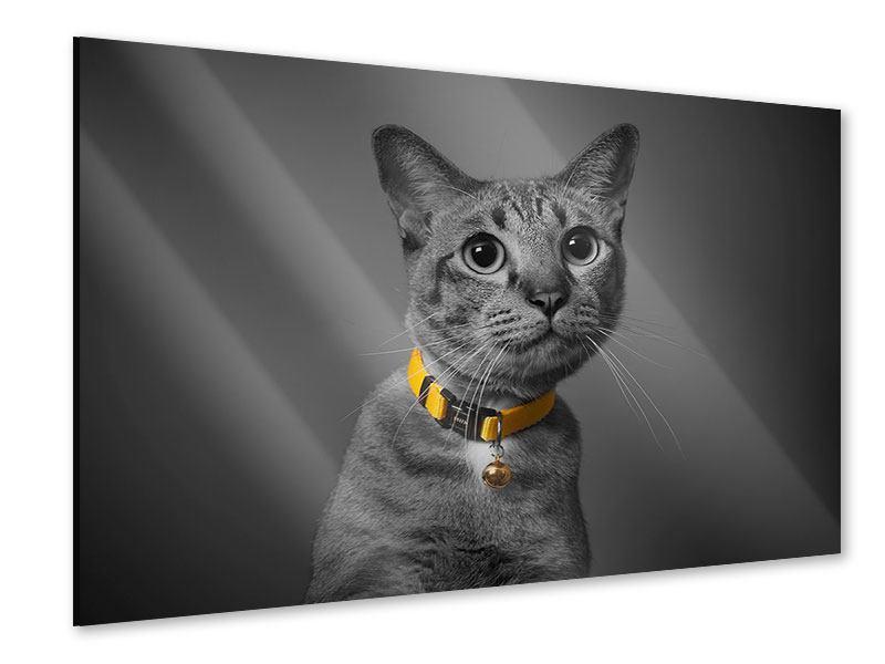 Acrylglasbild Katzenlady