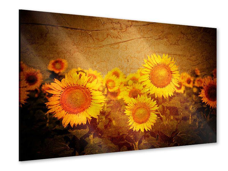 Acrylglasbild Retro-Sonnenblumen
