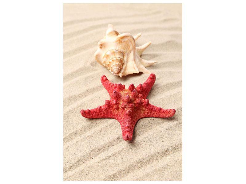 Acrylglasbild Die Muschel und der Seestern