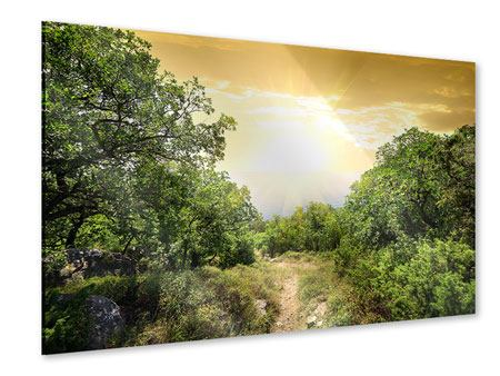 Acrylglasbild Am Ende des Waldes