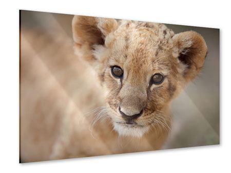 Acrylglasbild Löwenbaby