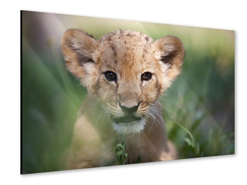 Acrylglasbild Das Löwenbabay