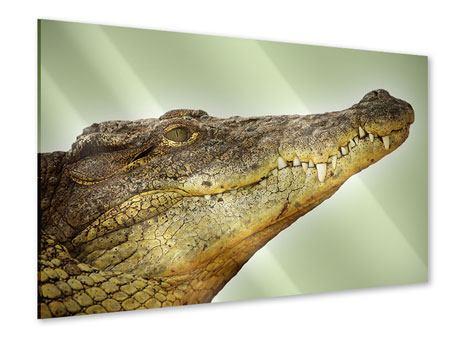 Acrylglasbild Close Up Alligator