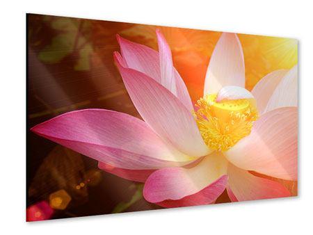 Acrylglasbild Close Up Lotus