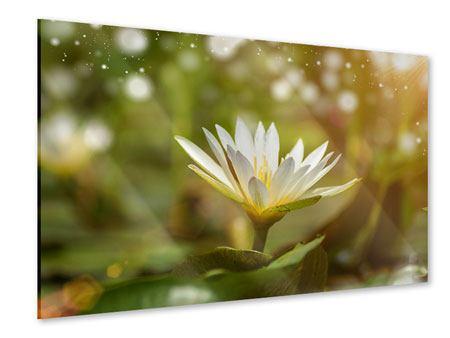 Acrylglasbild Lilien-Lichtspiel
