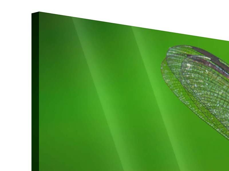 Acrylglasbild Die Libelle