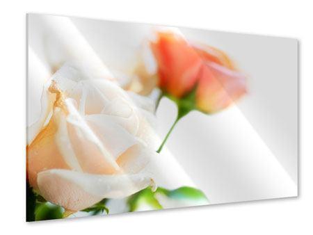 Acrylglasbild Rosenperspektive