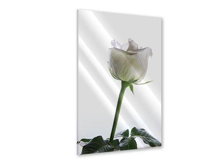 Acrylglasbild Im Namen der Rose