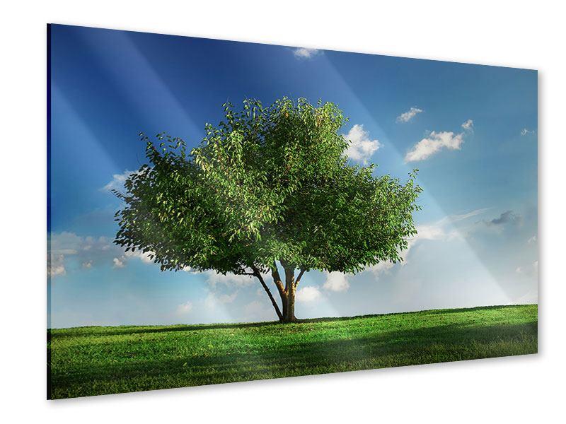 Acrylglasbild Baum im Grün