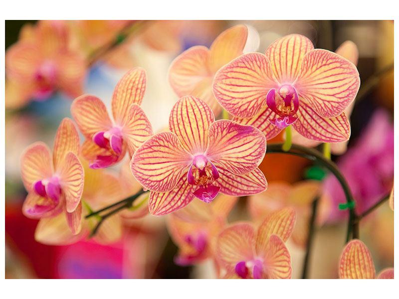 Acrylglasbild Exotische Orchideen