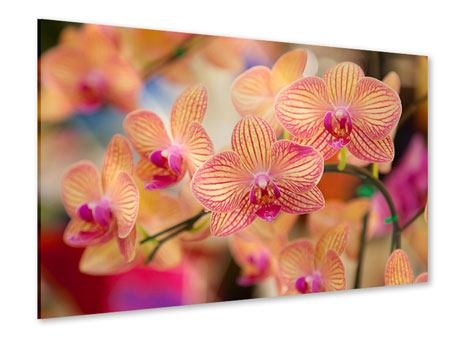 Acrylic Print Exotic Orchids