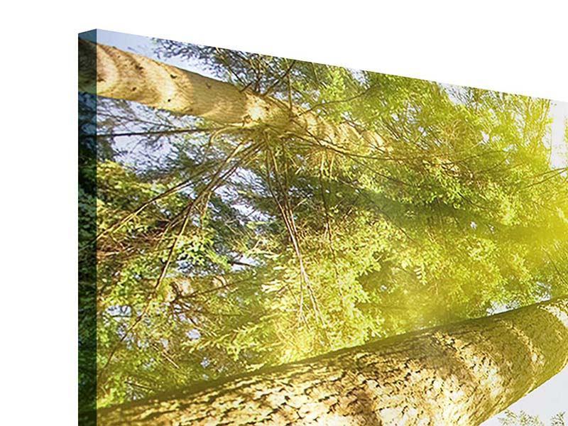 Acrylglasbild Baumkronen in der Sonne