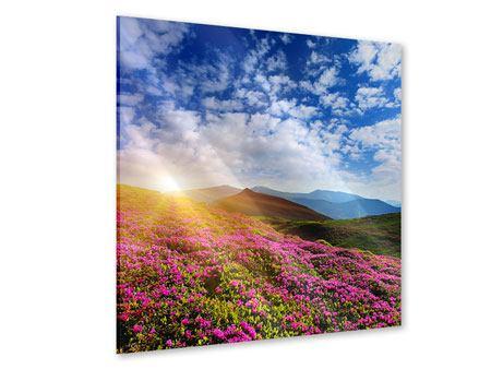 Acrylglasbild Blumige Berglandschaft