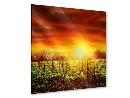 Acrylglasbild Der Weinberg bei Sonnenuntergang