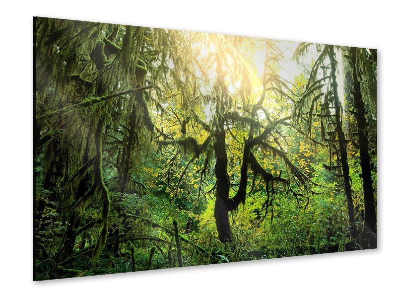 Acrylglasbild Verträumter Wald