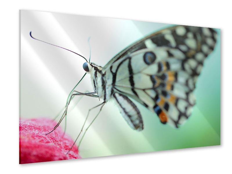 Acrylglasbild Schmetterling XXL