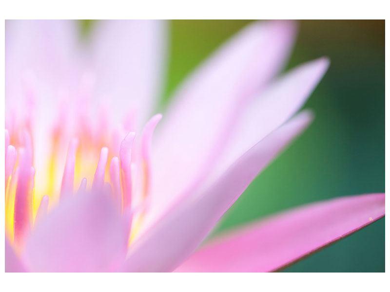 Acrylglasbild XXL-Lilie