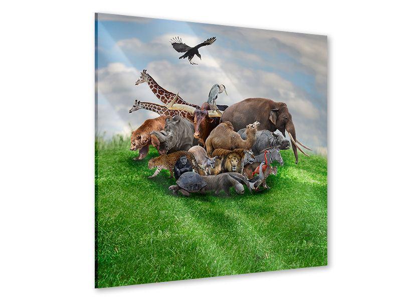 Acrylglasbild Bereit für die Arche Noah