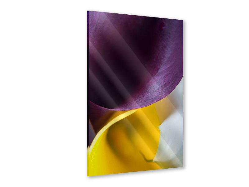 Acrylglasbild Macro Calla