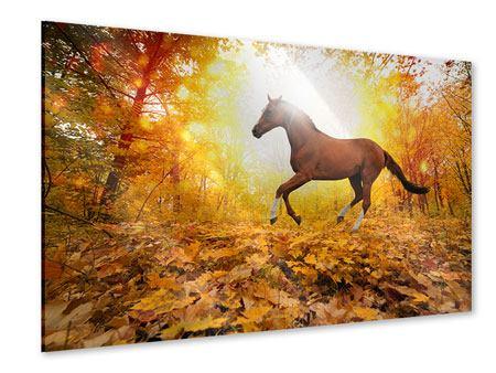 Acrylglasbild Vollblut im Herbstwald