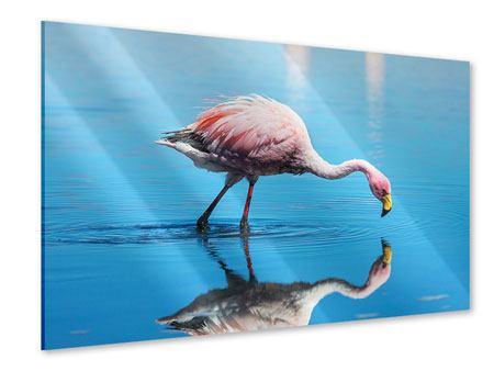 Acrylglasbild Der Flamingo