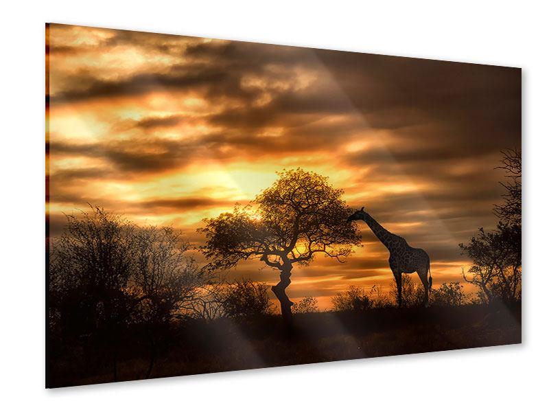 Acrylglasbild African Dreams