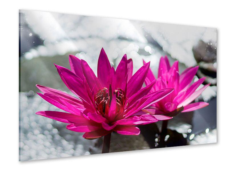 Acrylglasbild Seerosenduo in Pink