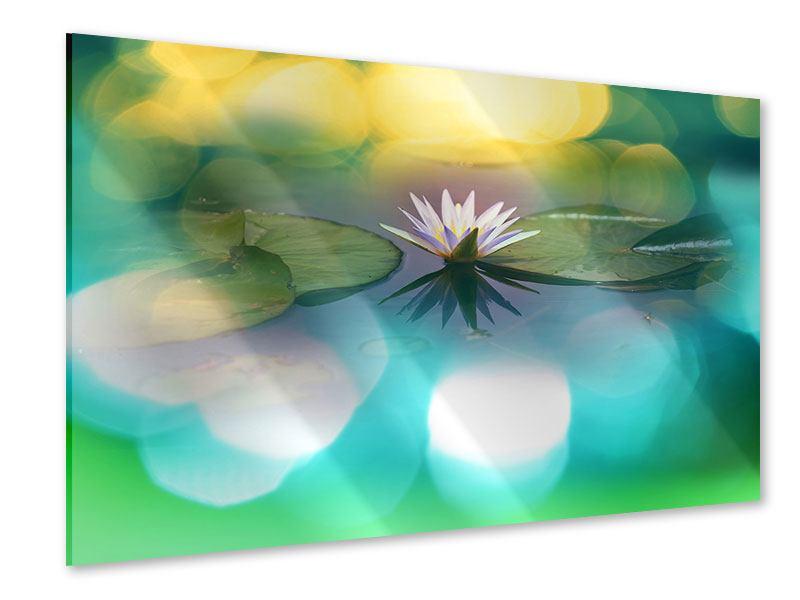Acrylglasbild Lotus-Spiegelung