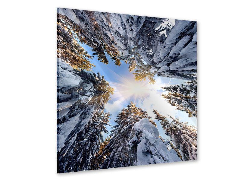Acrylglasbild Verschneite Tannenspitzen in der Sonne