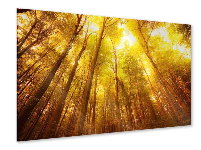 Acrylglasbild Herbstwald