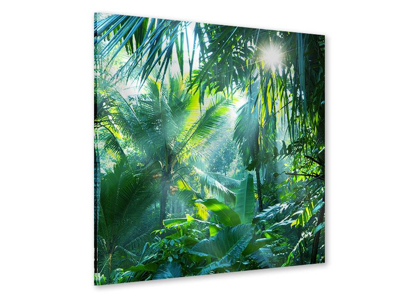 Acrylglasbild Im Tropenwald
