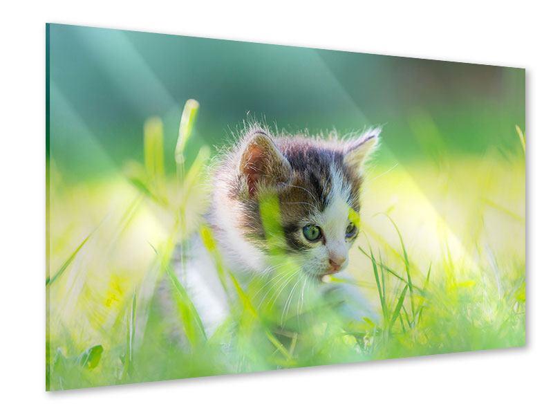 Acrylglasbild Kitten