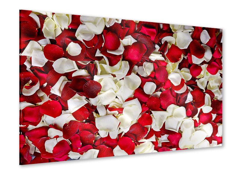 Acrylglasbild Rosenblätter