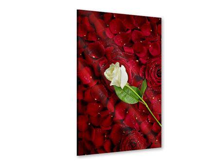 Acrylglasbild Auf Rosen gebettet