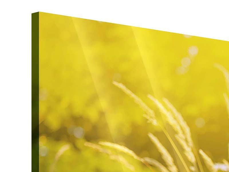 Acrylglasbild Sommerliche Blumenwiese