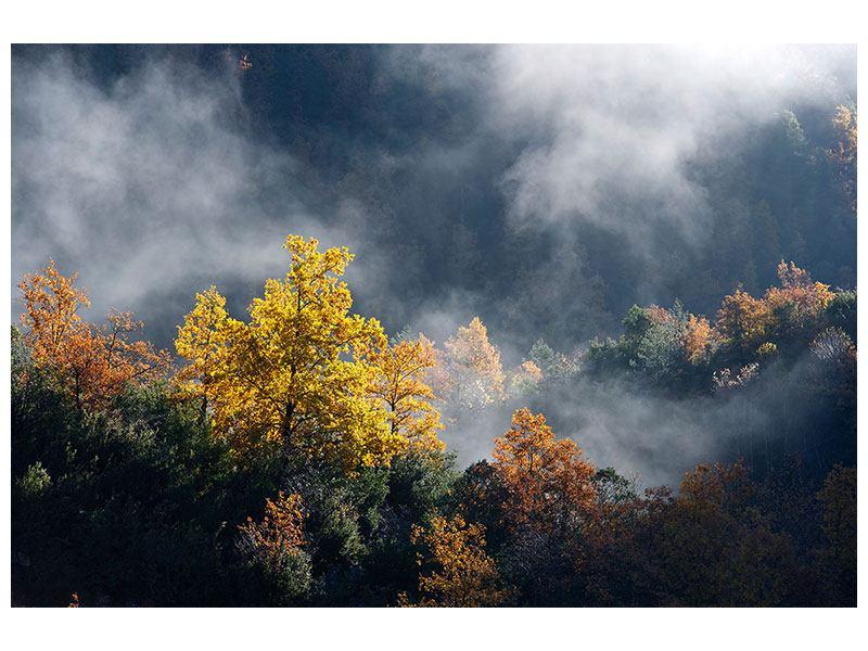 Acrylglasbild Mondscheinwald