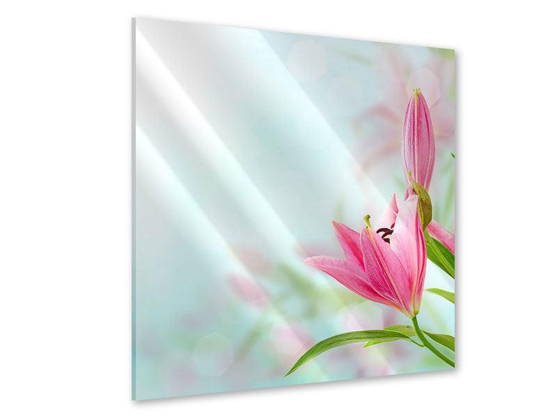 Acrylglasbild Romantische Lilien