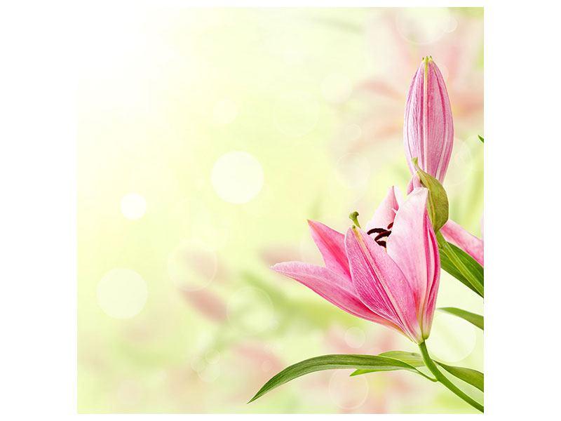 Acrylglasbild Lilien-Perspektive