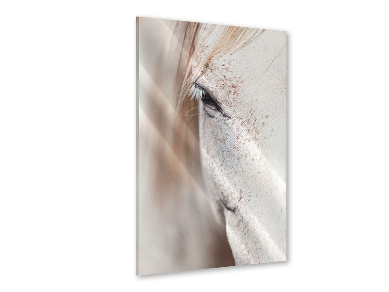 Acrylglasbild Der Blick des Vollblut-Schimmels