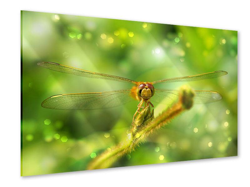 Acrylglasbild XXL-Libelle
