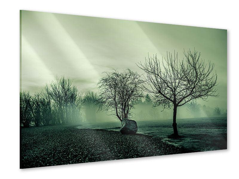 Acrylglasbild Der Auwald im Nebel