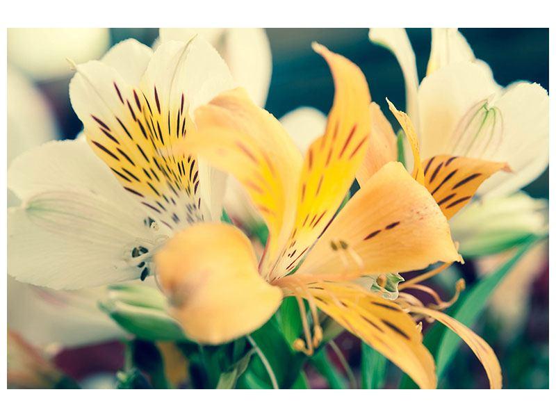 Acrylglasbild Tigerlilien