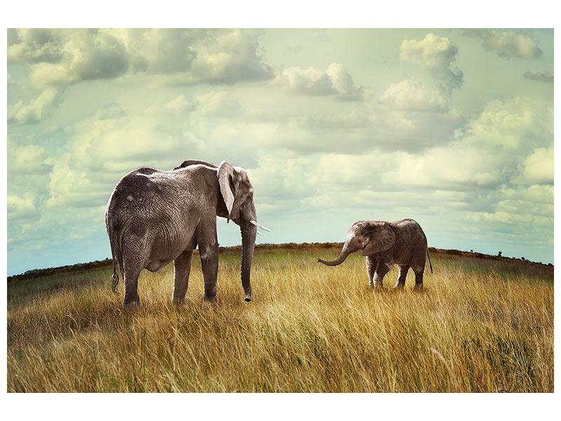 Acrylglasbild Elefanten und Feng Shui